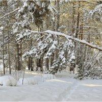 Зимняя тропинка :: Дмитрий Конев