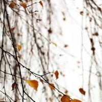 Последние листья :: Елена Сидорова