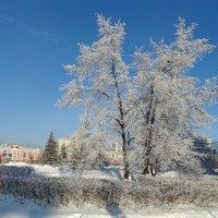 Морозный день :: Виктор Четошников