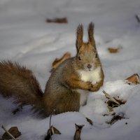 И что, ни одного орешка? Совсем-совсем?! :: Сандродед
