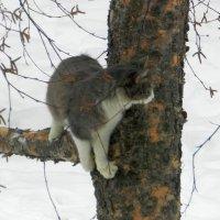 Не уж то .ко мне прибегут :: Николай Сапегин