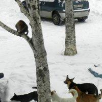 Вышли кошки зимнем утром погулять и вдруг....../серия 5шт/ :: Николай Сапегин