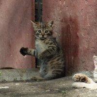 Удивленный котейка :: Вячеслав Макаров