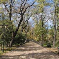 Осенний парк :: Ольга Башарова