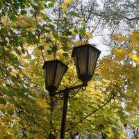 На фоне золота листвы... :: Ольга Башарова
