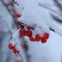 В снегу :: Екатерина ...
