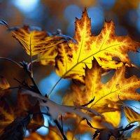 Осенние краски... :: Ирина Лядова