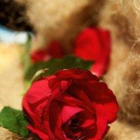 Роза  * :: Евгения Каравашкина