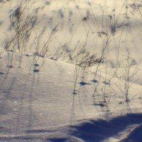 снежный  пейзаж... :: Валерия  Полещикова