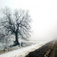 Ноябрь. Туман. Дорога :: Константин Филякин