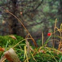 Осенние наблюдалки... :: марк