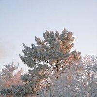 Деревья скрыла седина... :: Tanya Sukhomlinova