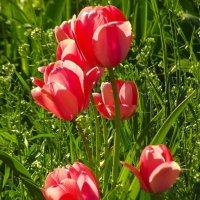 Цветы :: Татьяна Муляренко