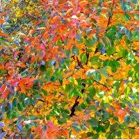 Осень одевала весь вишневый сад в листья ярко-пестрые, будто на парад. :: Валентина ツ ღ✿ღ