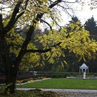 Осень. Ботанический сад. Минск :: Gennadiy Karasev