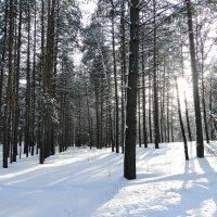Солнце в зимнем лесу :: Елена Шемякина