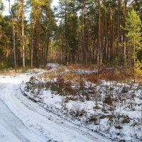 В зимнем лесу :: Леонид Корейба