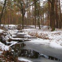 Лесная речка в декабре :: Леонид Корейба