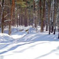 Зима в моем городе :: Лидия (naum.lidiya)