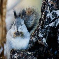 А я орехи ем, и никаких проблем! :: Вадим Кудинов
