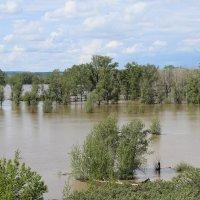 наводнение :: Виктор