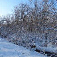 Зима в начале декабря... :: Тамара (st.tamara)