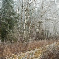 Зима в декабре :: Александр Лебедев