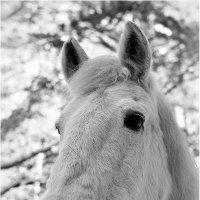 Портрет лошади :: Дмитрий Конев