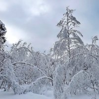 Зимняя сказка :: Liliya Kharlamova