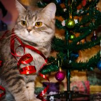 Новый год) :: Анастасия Журавлева