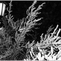 Ночь. Улица. Фонарь... :: Августина Ли