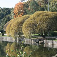 Три дерева на берегу озера :: Владимир Фролов