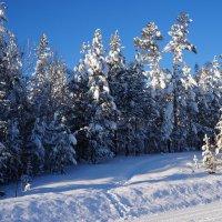 Самый короткий зимний день. :: Ольга