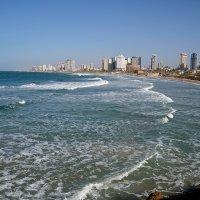 Декабрь в Израиле :: Александр Гурьянов