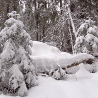Зима замела... :: Валентина. .