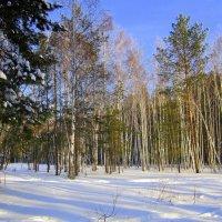 Зима в Сибири . :: Мила Бовкун