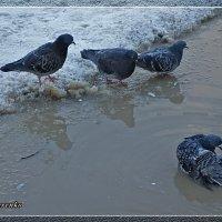 Успеть до морозов принять ванну :: Виктор Бондаренко