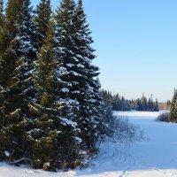 Прогулки по зимнему лесу :: Вера Андреева