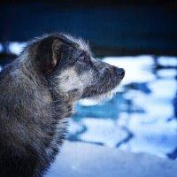 О бездомных собаках :: Ольга Мальцева