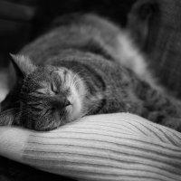 Счастье есть!!! Есть, есть, есть, а потом спать! :: Val Савин