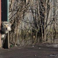 Осторожно ... крайне злая собака .... ) :: Алексадр Мякшин