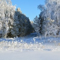 Зимние  цветы :: Геннадий С.