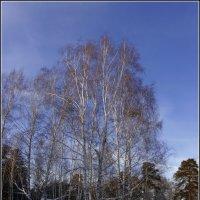 11.День зимнего солнцестояния ---03 :: Владимир Холодный