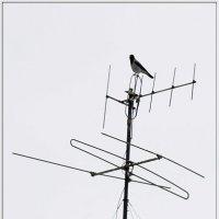 На крыше дома моего... :: muh5257