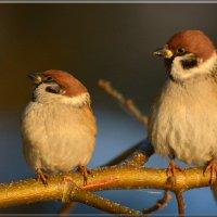 ррравняйсь! :: linnud