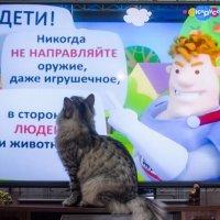 Главное, чтобы они это знали! :: Сергей Щербаков