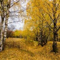 Осенний блюз :: Валентин Котляров