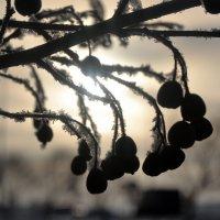 Мороз и солнце день чудесный... :: Ольга Ларионова
