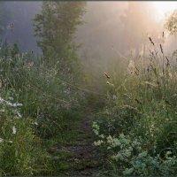 Там на неведомых дорожках... :: Надежда Лаврова