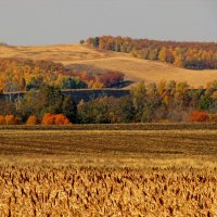 Лесостепь осенью :: Константин Филякин